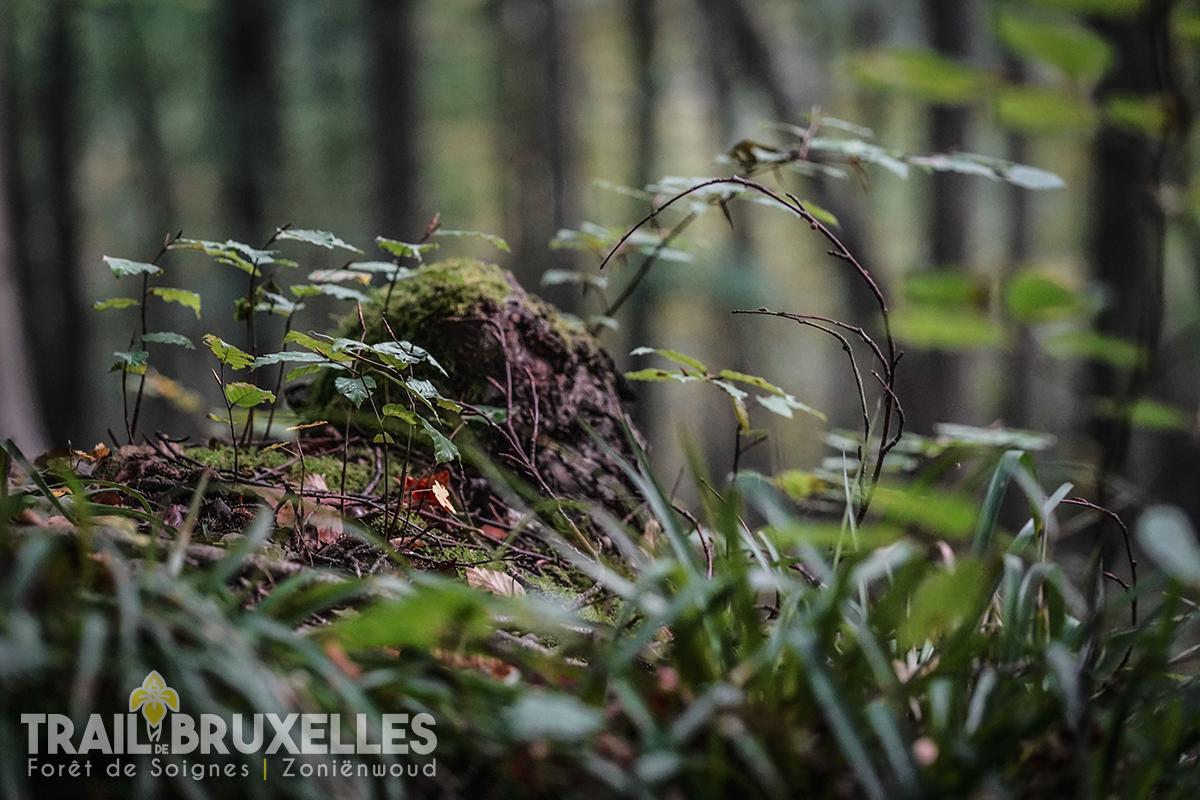 Trail de Bruxelles